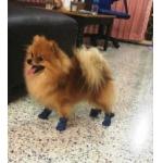น้องกูเกิ้ล รองเท้าสุนัข ผ้ายีนส์