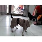 น้องจัมโบ้กับเสื้อสุนัข เสื้อหมา เสื้อน้องหมา เสื้อผ้าหมา เสื้อแมว เสื้อผ้าสุนัข ชุดข้าราชการ