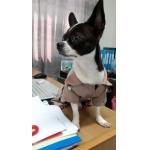 น้องจัมโบ้ใส่เสื้อสุนัข เสื้อหมา เสื้อน้องหมา เสื้อผ้าหมา เสื้อแมว เสื้อผ้าสุนัข ชุดข้าราชการ