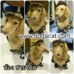 น้องชายโต๊ดกับcombo set เสื้อสุนัข เสื้อหมา เสื้อน้องหมา เสื้อผ้าสุนัข เสื้อผ้าหมา เสื้อแมว เชิ๊ตทหารสีน้ำตาล หมวกแกปสุนัข