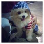 น้องถุงเงิน เสื้อสุนัข เสื้อหมา เสื้อน้องหมา เสื้อผ้าหมา เสื้อแมว เสื้อผ้าสุนัข ชุดเอี๊ยมยืด Polka Dot ลายสหรัฐ