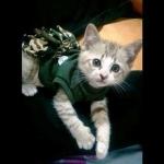 น้องเซกิในชุดเสื้อสุนัข ชุดเดรสทหาร
