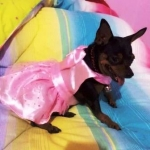 น้องแตงไทย เสื้อสุนัข เดรสสายคล้องราตรี สีชมพู