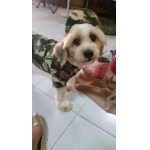 น้องโปกเกอร์ กับcombo set เสื้อสุนัข เสื้อหมา เสื้อน้องหมา เสื้อผ้าสุนัข เสื้อผ้าหมา เสื้อแมว เชิ๊ตทหารสีเขียว หมวกแกปสุนัข