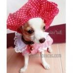 น้องไมลี่กับหมวกสุนัข หมวกหมา หมวกแมว ทรงหมวกตุ๊กตา สีแดง