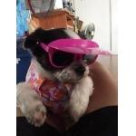 น้อง Goody แว่นสุนัข แว่นหมา แว่นน้องหมา แว่นแมว กันแดด สีชมพูม่วง