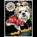รีวิวเสื้อสุนัข ชุดจีน สีแดง