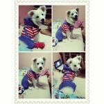 เสื้อสุนัข ชุดเอี๊ยมยืด Polka Dot ลายสหรัฐ รีวิวจากลูกค้า