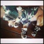 น้องหมูหยอง หมวกสุนัขมีหู ลายทหาร สีเขียว