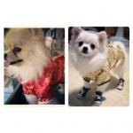 รีวิวคู่ เสื้อสุนัข ชุดจีน สีแดง