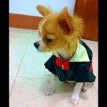 น้องหมูทอด เสื้อสุนัข ชุดทักซิโด้ชาย สูทดำ