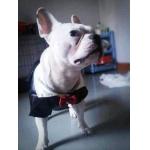 เฟรนบูลด๊อก เสื้อสุนัข ชุดทักซิโด้ชาย สูทดำ