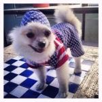 ออมทรัพย์ เสื้อสุนัข ชุดเอี๊ยมยืด Polka Dot ลายสหรัฐ