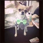 น้องมิคกี้ เสื้อสุนัข ทักซิโด้ สก๊อต โบว์เขียว