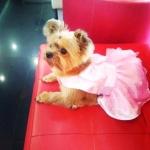 น้องทองม้วน เสื้อสุนัข เดรสสายคล้องราตรี สีชมพู