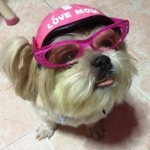 น้องหมูปิ้ง แว่นสุนัข หมวกกันน็อคสุนัข สีชมพู