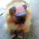 review หมวกสุนัขมีหู หมวกหมามีหู หมวกแมวมีหู ลายธงชาติสหรัฐ