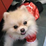 review เสื้อสุนัข ชุดจีน สีแดง
