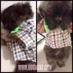 review เสื้อสุนัข ทักซิโด้ สก๊อต โบว์เขียว