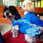review เสื้อสุนัข เดรสเอี๊ยมยืด ลายตุ๊กตา สีฟ้า