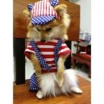 reviews หมวกสุนัขมีหู หมวกหมามีหู หมวกแมวมีหู ลายธงชาติสหรัฐ