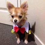 reviews เสื้อสุนัข ชุดนักเรียนอินเตอร์ ขอบเหลือง
