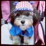 reviews เสื้อสุนัข ชุดโปโล มีไทด์ มีอินธนู สีน้ำเงิน