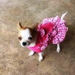 reviews เสื้อสุนัข เสื้อหมา เสื้อผ้าหมา เสื้อน้องหมา เสื้อแมว เสื้อผ้าสุนัข เดรสเอี๊ยมยืด ลายตุ๊กตา สีชมพู