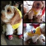 reviews เสื้อสุนัข เสื้อยืด ลาย london สีเหลือง หลัง