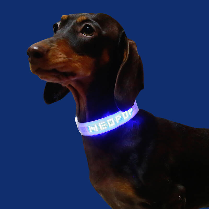Review Dogacat Smart LED Collar1
